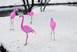 flamingossnow